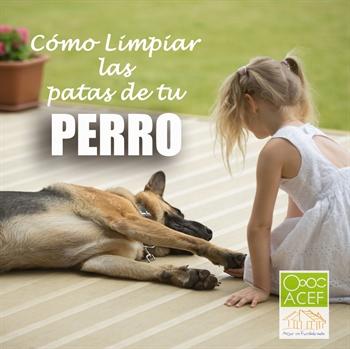 Imagen de la categoría COMO LIMPIAR LAS PATAS A TU PERRO TRAS VOLVER DEL PASEO