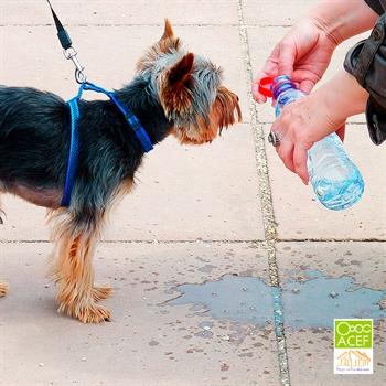 Imagen de la categoría Consejos para ayudar a tu perro con el calor