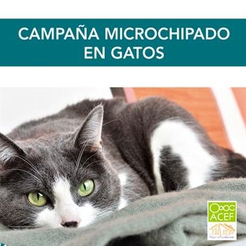 Imagen de la categoría Identificacion mediante microchip en gatos